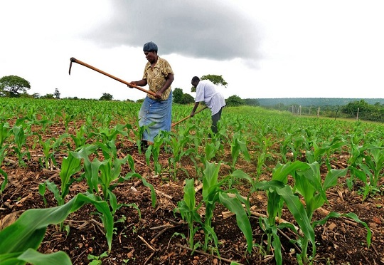 Public Private Partnerships crucial to transforming agriculture